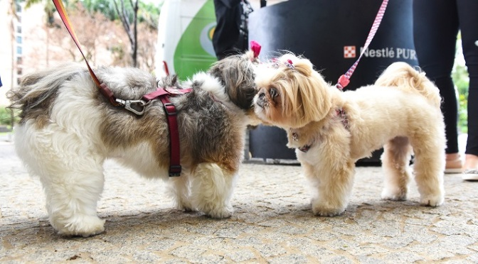 Purina® promove experiências na primeira Casa TPM pet friendly